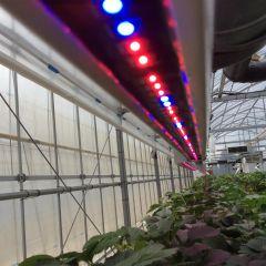 LED電照